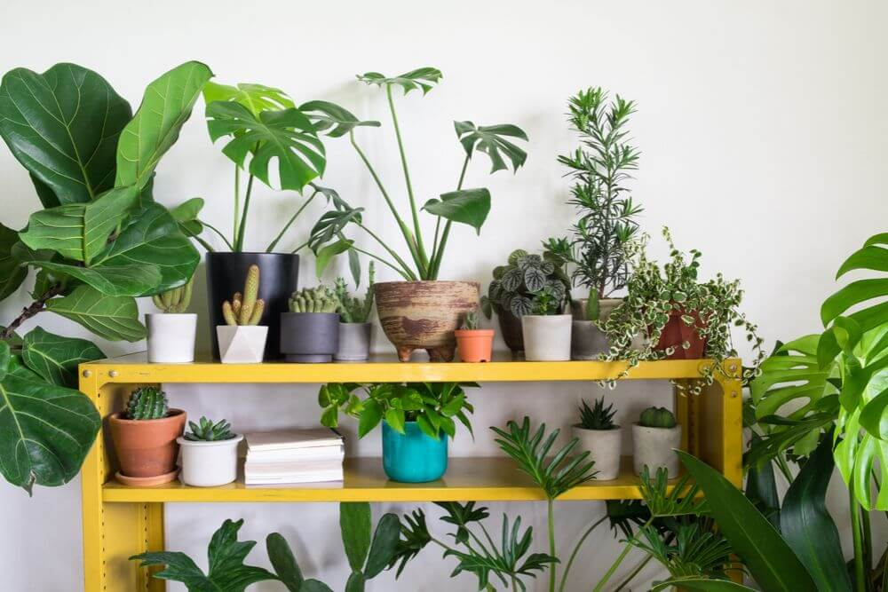 various types of potted plants sitting on a yellow shelf