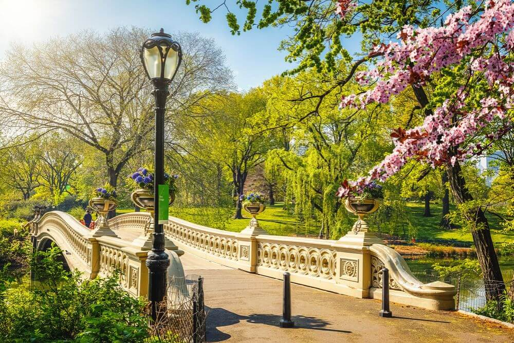 a bridge and lamp post in central park in new york city
